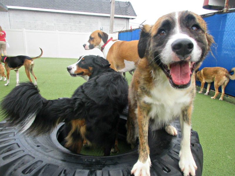 Dog having fun at The Watering Bowl South County, February 4th 2019