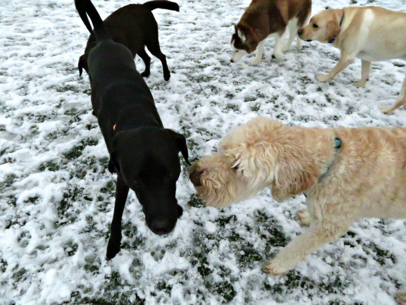 Dog having fun at The Watering Bowl St. Peters, February 20th 2019
