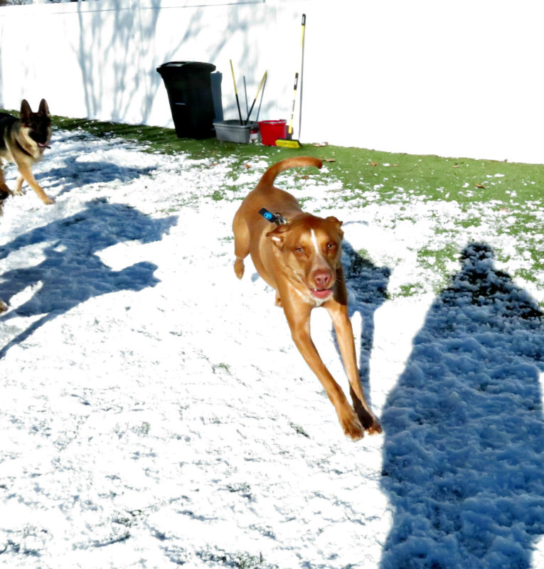 Dog having fun at The Watering Bowl St. Peters, March 6th 2019