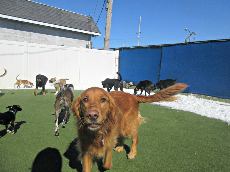 Dog having fun at The Watering Bowl South County, March 6th 2019