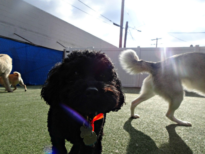 Dog having fun at The Watering Bowl South County, March 21st 2019