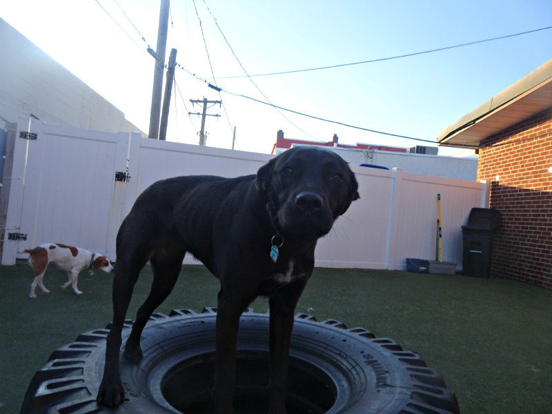 Dog having fun at The Watering Bowl South County, March 27th 2019