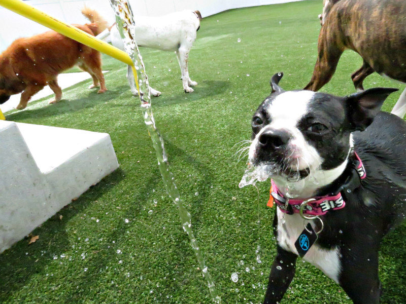 Dog having fun at The Watering Bowl St. Peters, April 3rd 2019