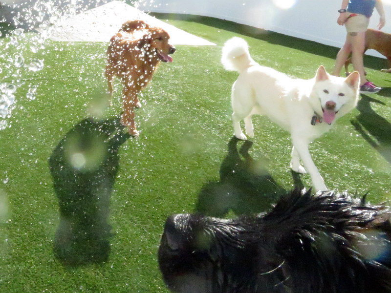 Dog having fun at The Watering Bowl St. Peters, April 8th 2019