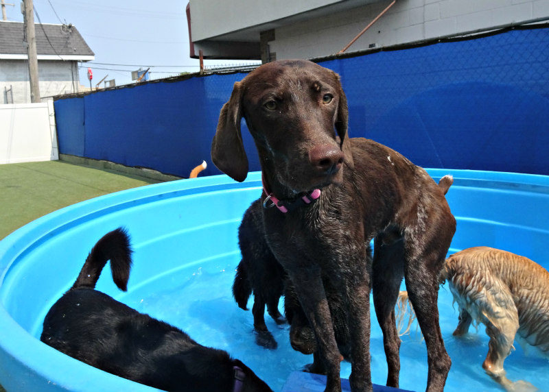 Dog having fun at The Watering Bowl South County, June 1st 2019