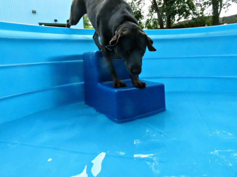 Dog having fun at The Watering Bowl St. Peters, June 8th 2019