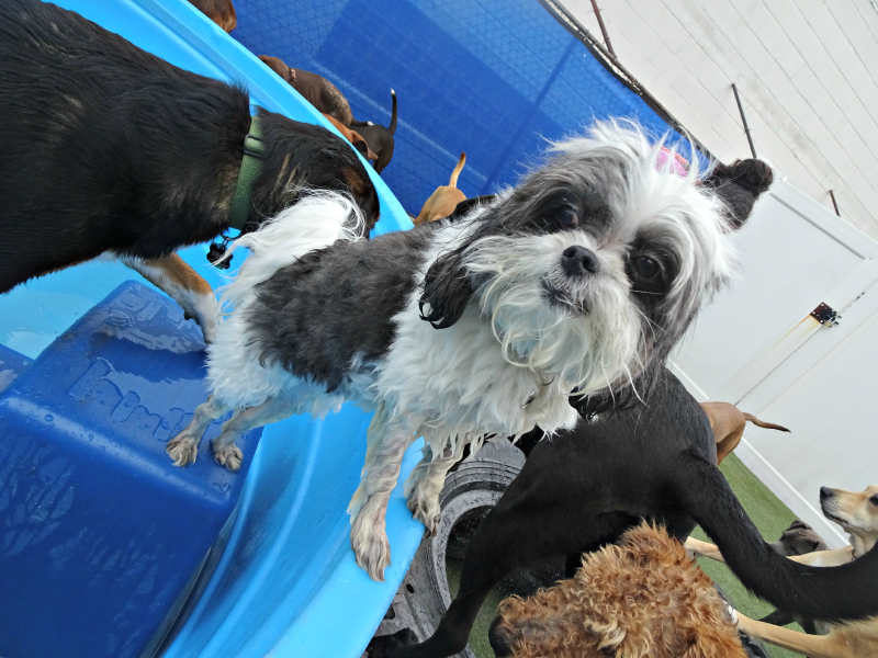 Dog having fun at The Watering Bowl South County, June 21st 2019