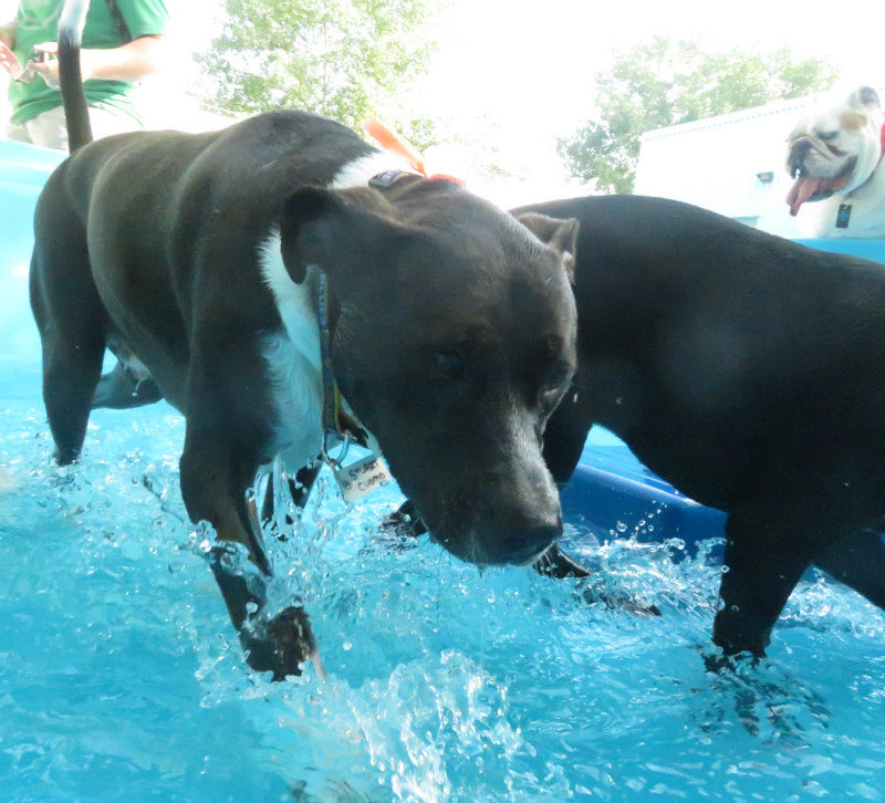 Dog having fun at The Watering Bowl St. Peters, July 5th 2019