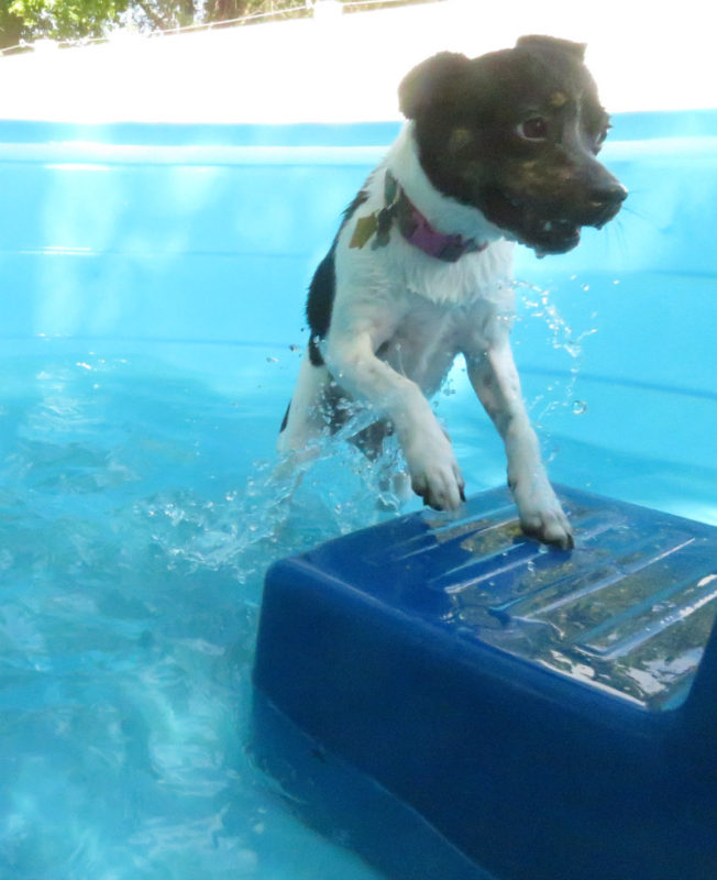 Dog having fun at The Watering Bowl St. Peters, July 11th 2019